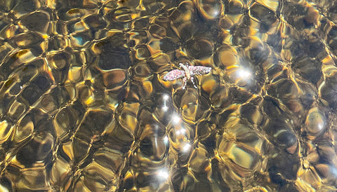 fly on water