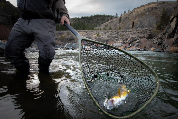 Netting a large brown trout truckee river
