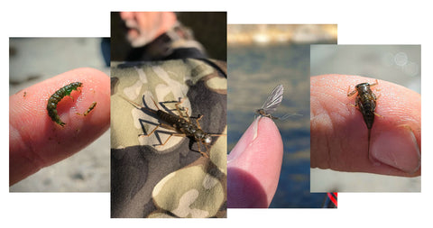 Bugs and flies on the Truckee River