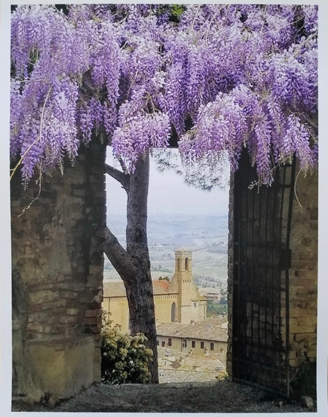 Photos of Italy- Wisteria, San Gimignano