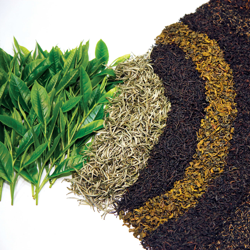 The Tea Journey From Shrub To The Cup