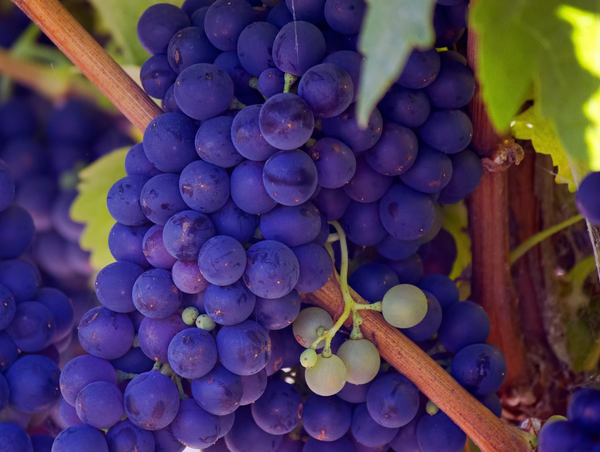 Do you know the difference between your Malbec and your Merlot? We reveal all…