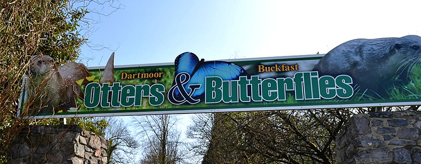 Dartmoor Otters and Buckfast Butterflies
