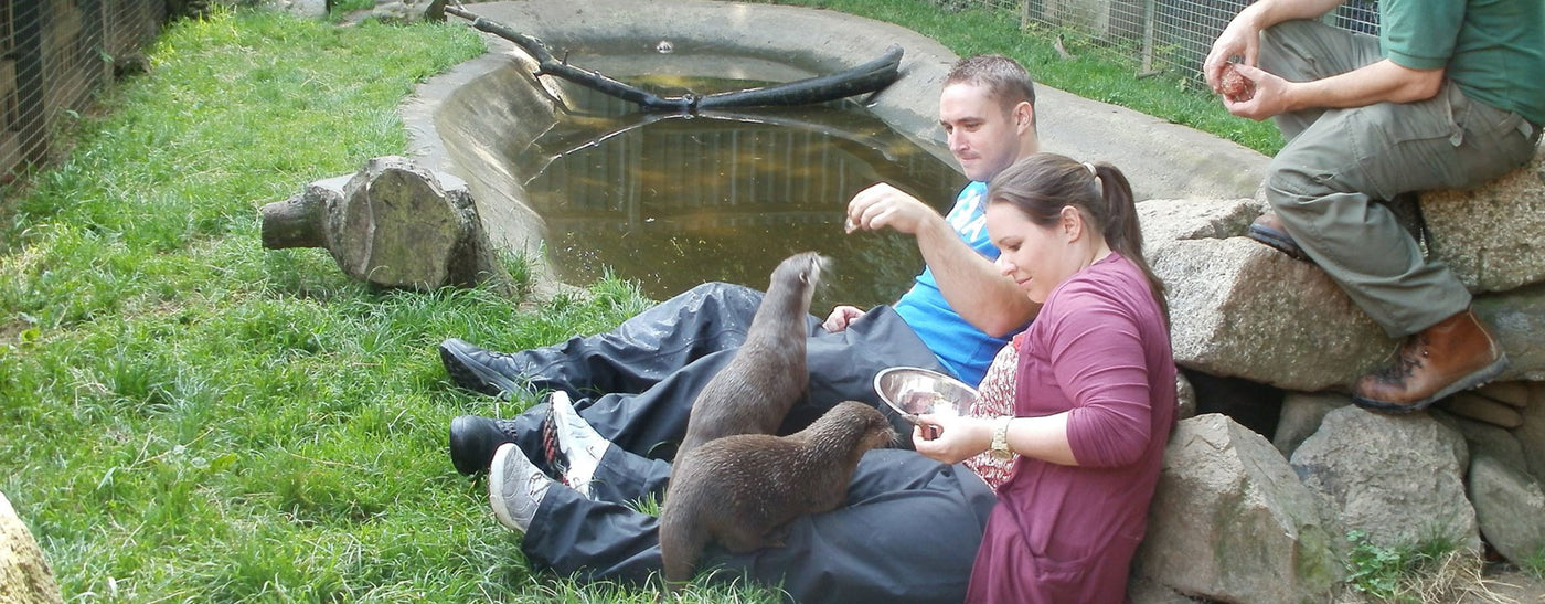 Otter Experience for couples at the Buckfast Otter Sanctuary