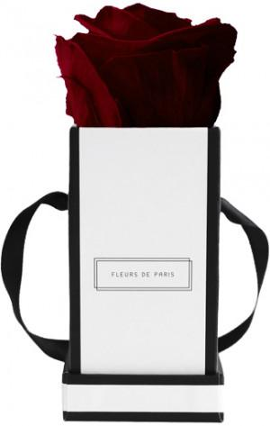 Fleurs de Paris Burgundy Mini White - Square