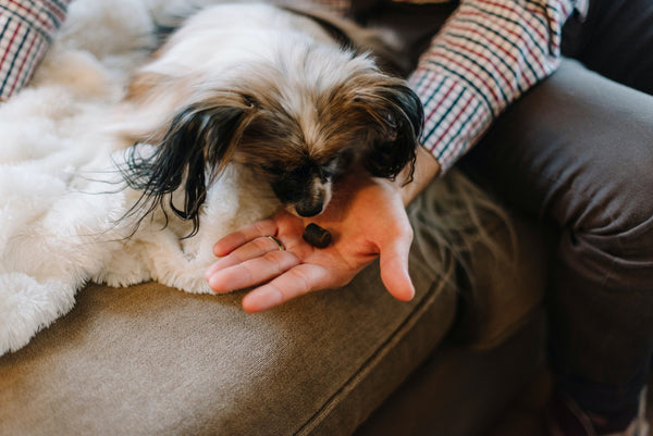 How to give CBD oil to dogs?