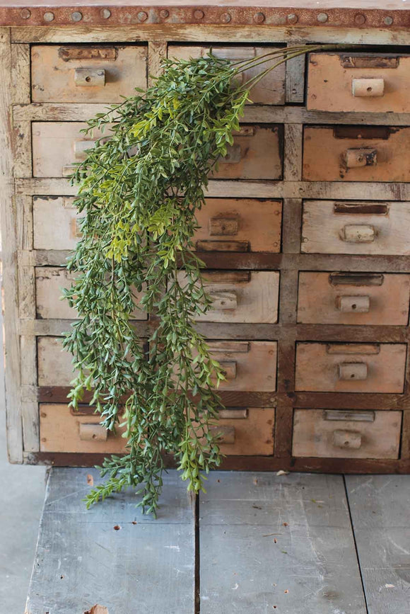 Hanging Boxwood