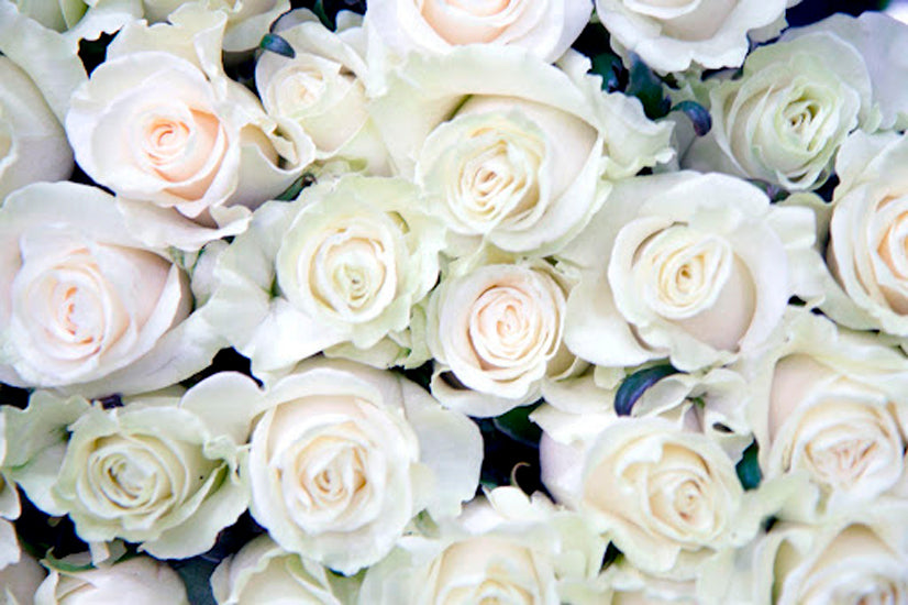 different types of roses and their meanings - La Florela