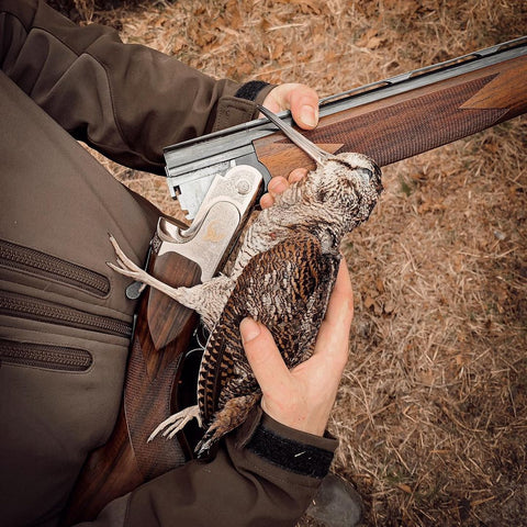 Chasse becasse