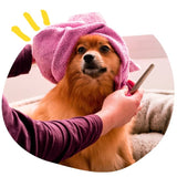 Le dog wash THE WOUF - concept