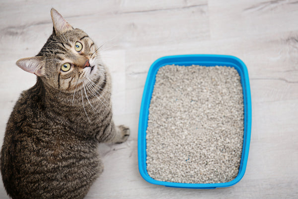 Cat sitting next to blue bin filled with cat litter