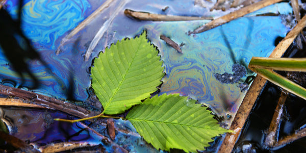 Green leaves with swirls of of oily water