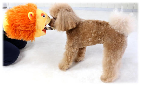Lion Puppet Rope Toy - Hannari  - 5