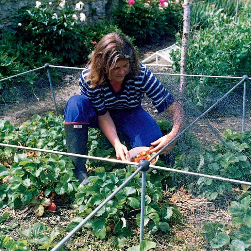 Strawberry cage - in use - Knowle Nets