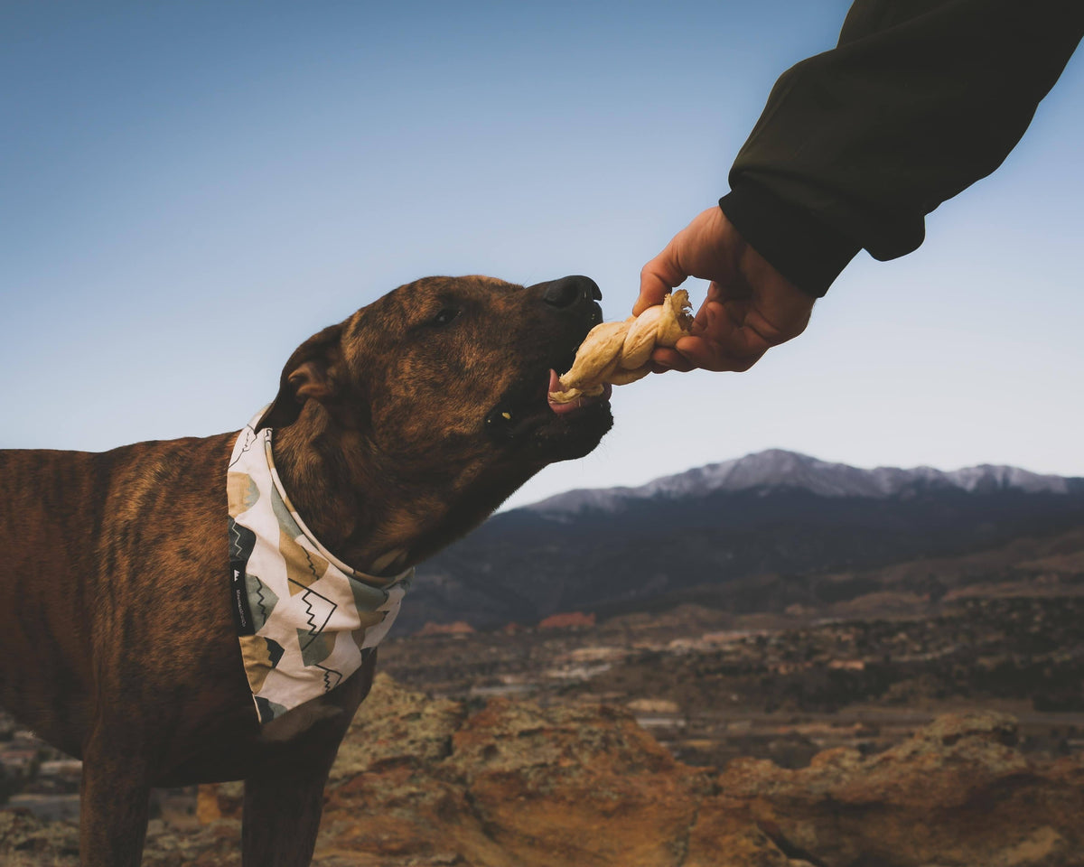 Pet Nutrition-6 Easy Dog Treats To Pack For Your Next Hike-redbarn-blog