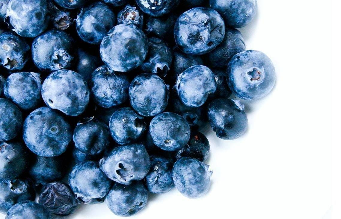 Pet Nutrition-Can Dogs And Cats Eat Blueberries?-redbarn-blog