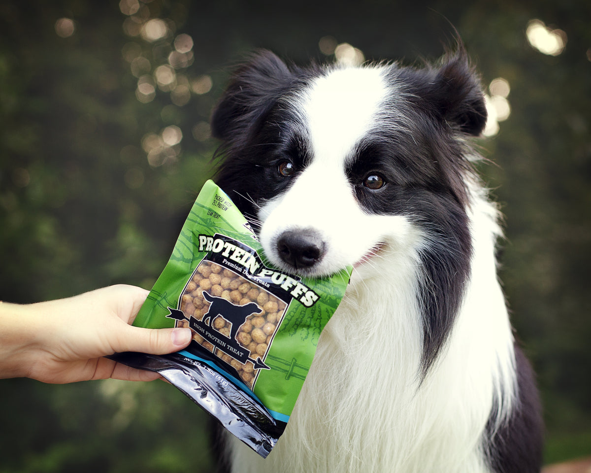 Become a Pro at Protein: Understanding Protein for Dogs | Redbarn.com