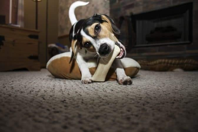 Pet Safety-How To Safely Give Your Dog a Bone-redbarn-blog