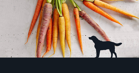 The Top 5 Reasons to Include Carrots In Your Dog's Diet