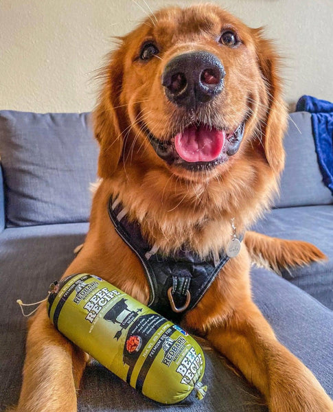 Golden Retriever smiling with Redbarn Beef Rolled Food by his side