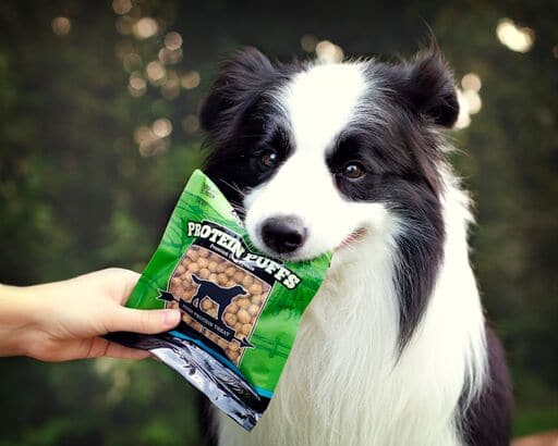 Border collie with a bag of Redbarn's Protein Puffs in his mouth