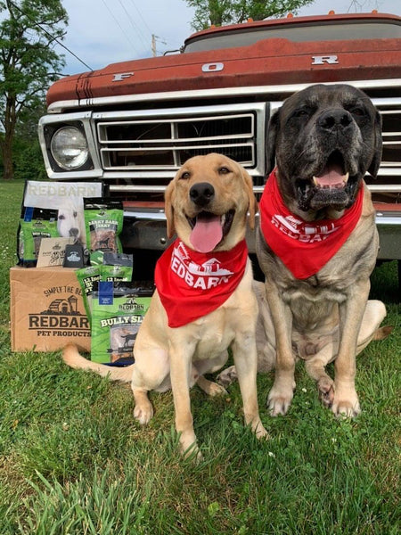 Yellow Lab and Mastiff sitting in front of an old truck with a Redbarn goodie box