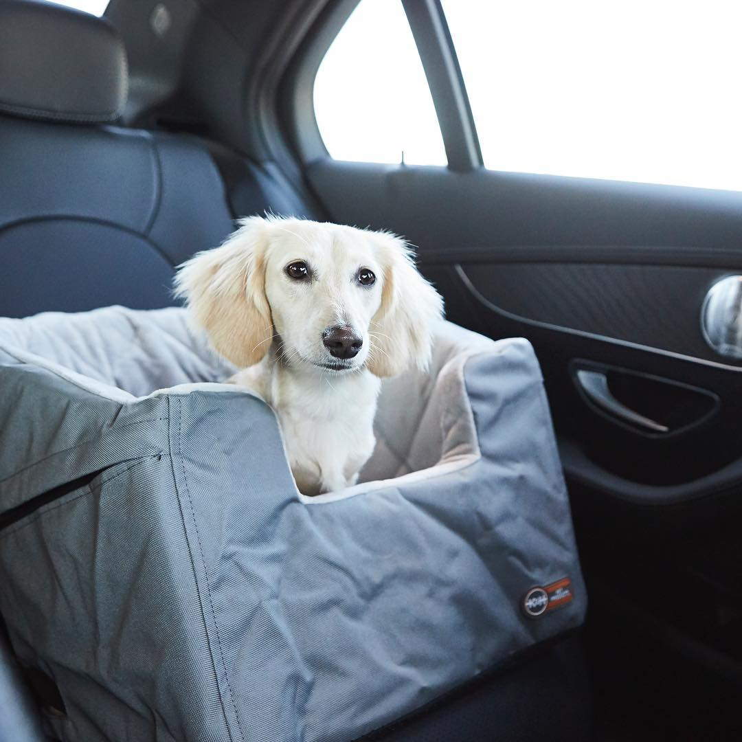 Dog Travel Tips by Car