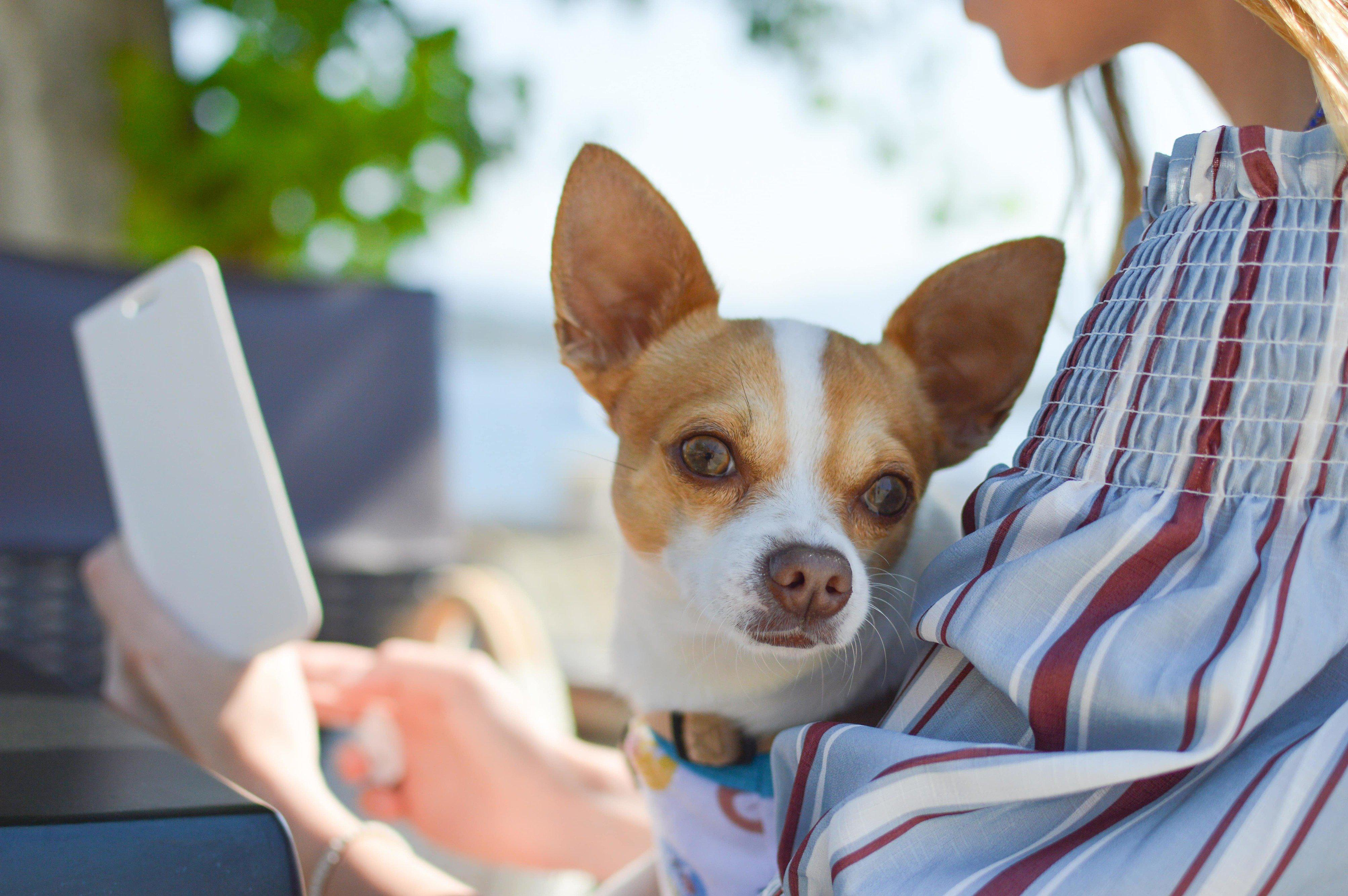 Travel tips for your dog