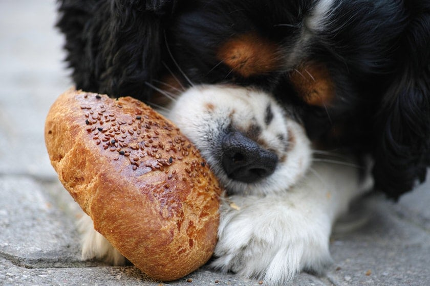 Should I feed my dog a grain or grain-free diet?