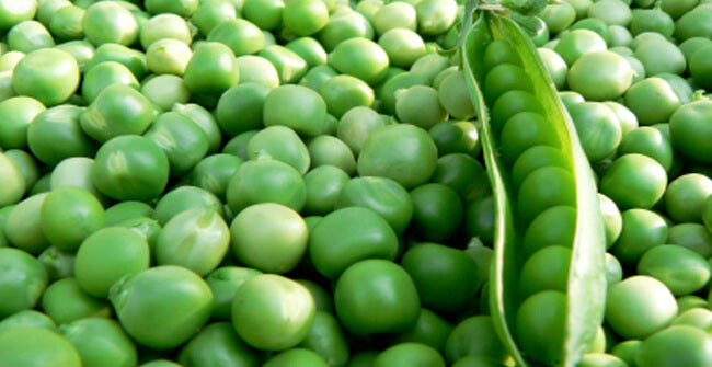 pea protein source