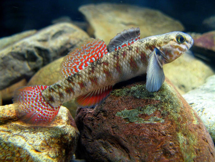 News from the Freshwater Aquarium