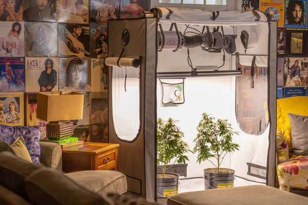 5 Benefits of Growing Your Own Organic Cannabis at Home