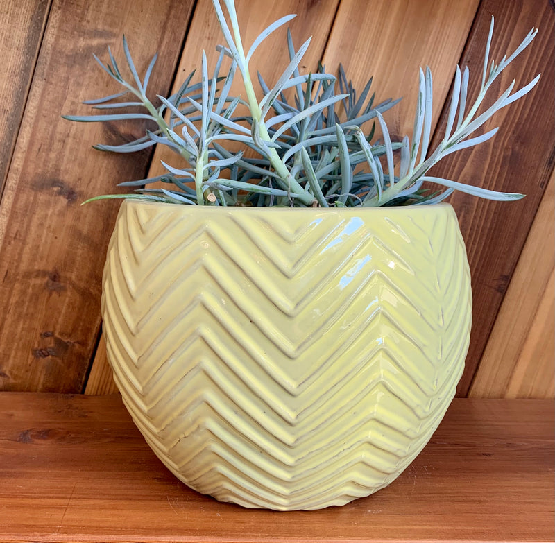 Ceramic Planter | Yellow Chevron