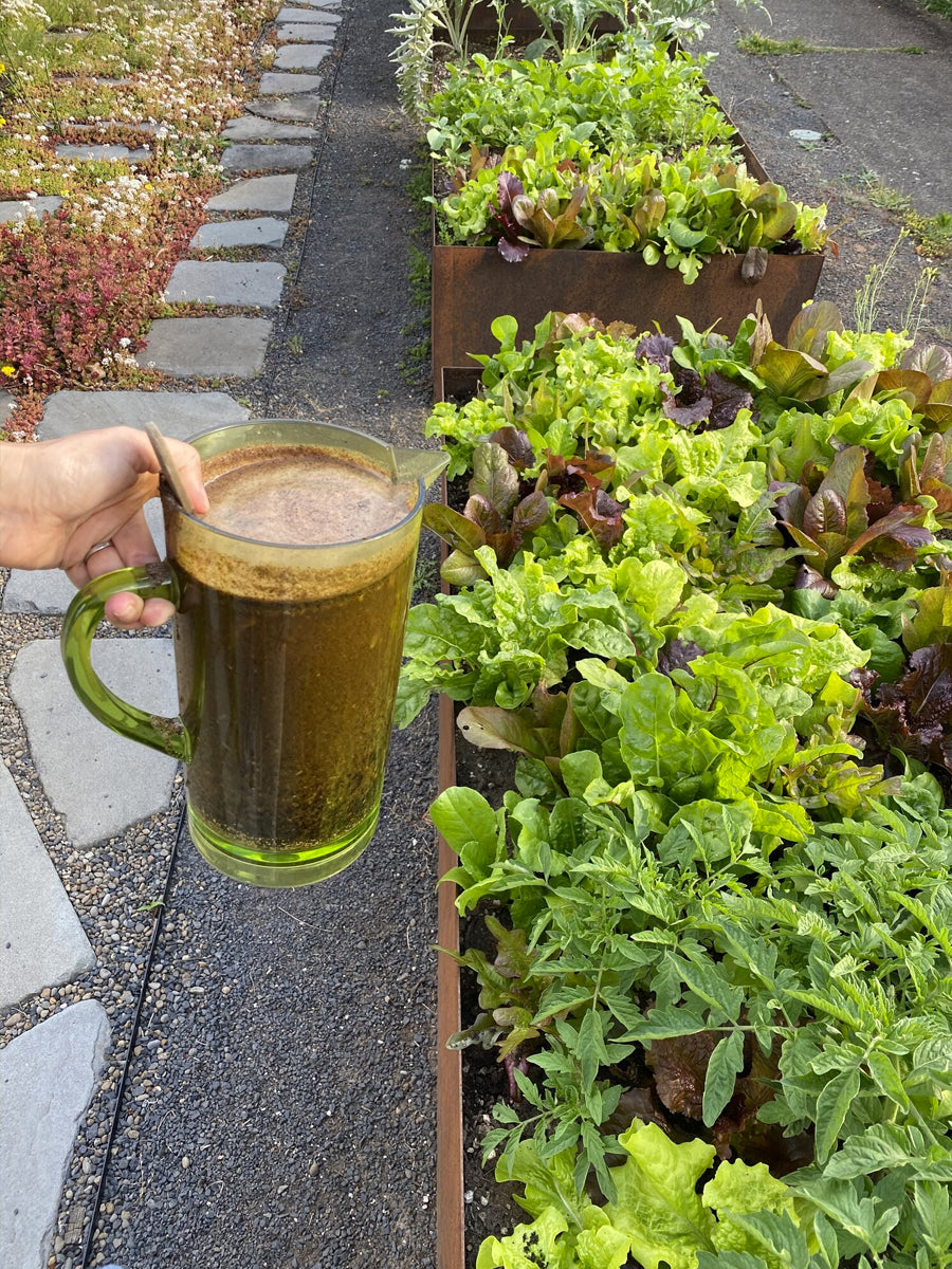 ZERO WASTE COMPOST TEA AND SMOOTHIE FOR YOUR GARDEN AND HOUSEPLANTS