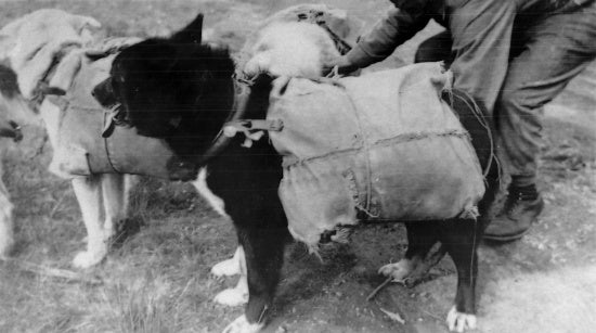 Dogs with Packs, 1934