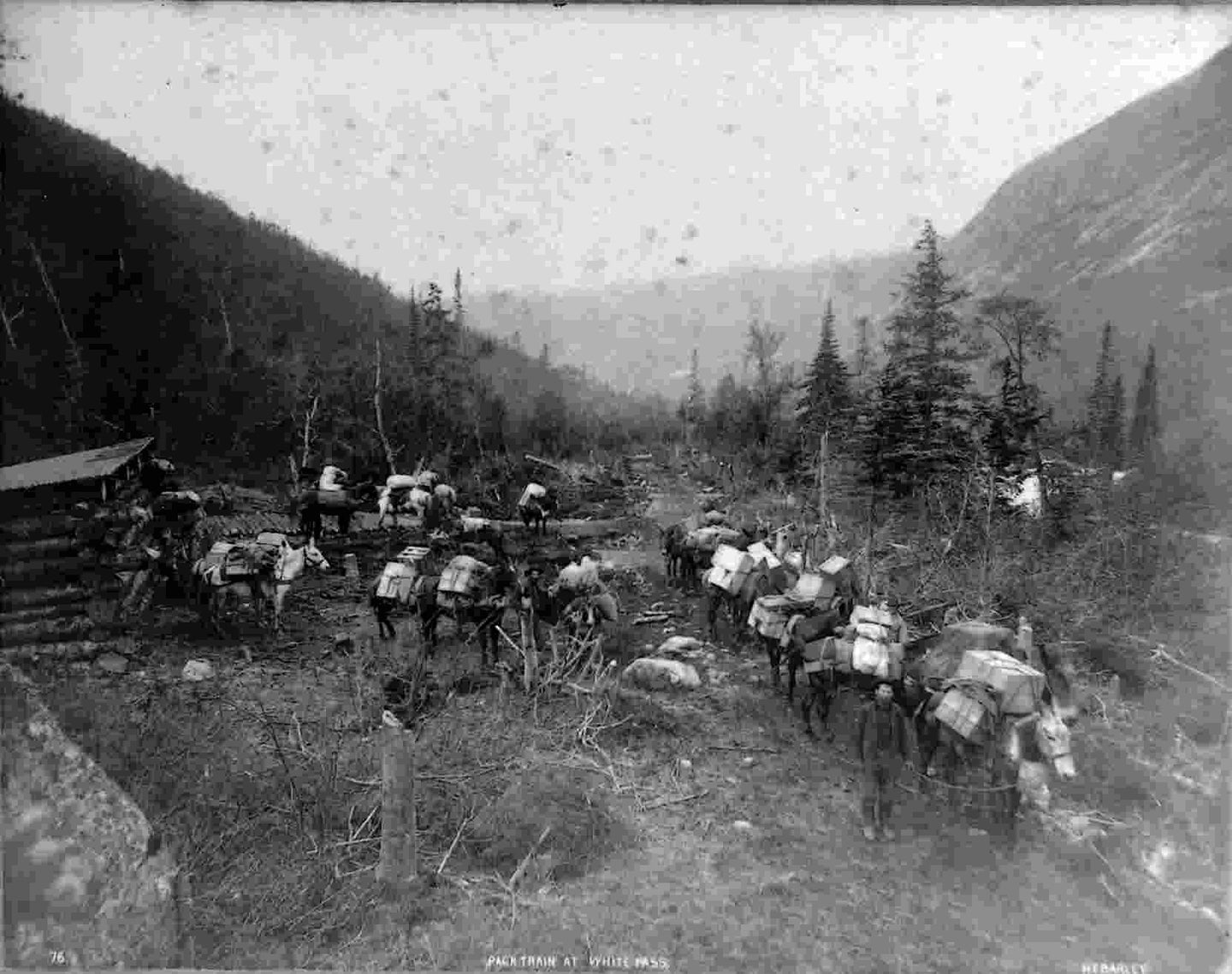 Pack Train at White Pass, c1898