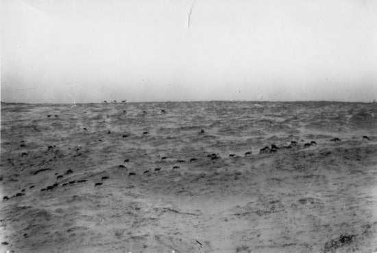 Herd of Caribou, c1914.