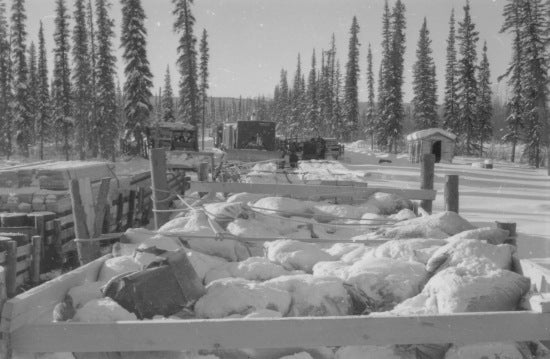 Cat Train along the Peel River, c1950.