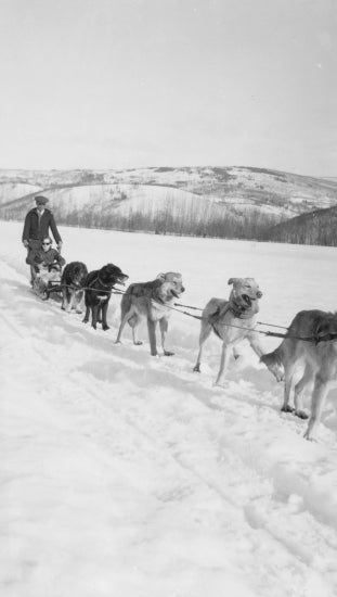 Travelling by Dog Sled, 1939.