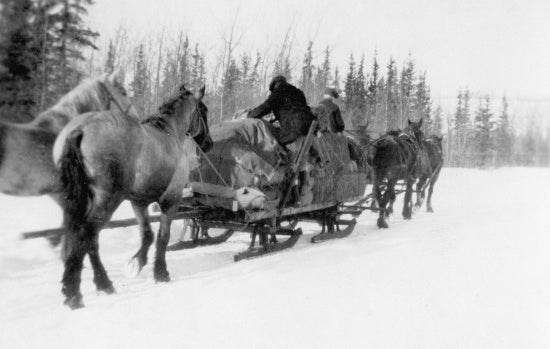 On the Trail to Dawson,1931