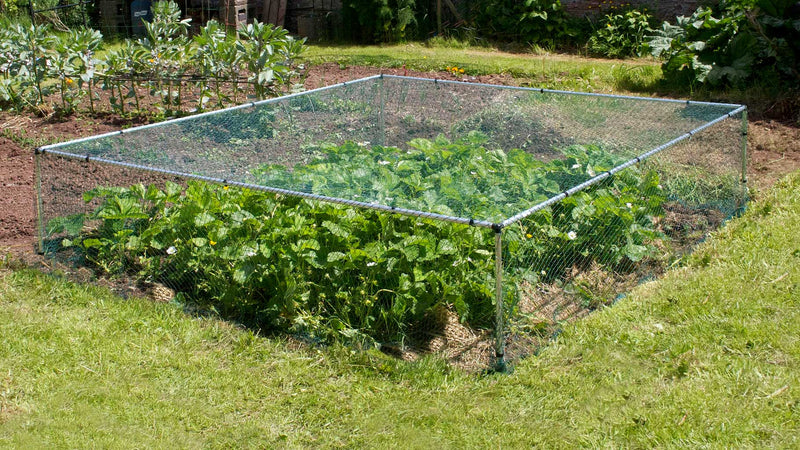 MainframeDirect -strawberry cage on veg patch