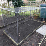 Mainframe direct- Vegetable cage tall- in use raised bed