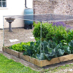 MainframeDirect- short vegetable cage- in use raised bed