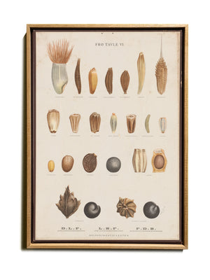 BOTANICAL WALL CHART in Oak frame