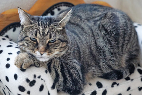 Cat Health and Caring for Cats