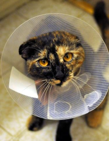 Health Care for Your Pet Cat