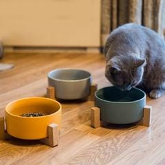 The Best Cat Feeders and Bowls for 2021