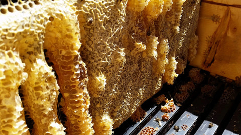 capped honey combs