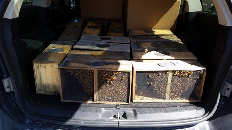 traveling with bees