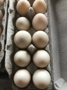 DUCK Eggs Farm Fresh Eggs - per dozen